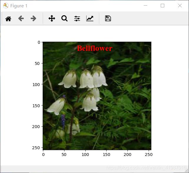 机器学习----keras 设计一个CNN卷积神经网络花卉分类器进行花卉的分类