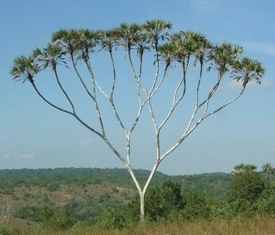 数据结构(11)---二叉树